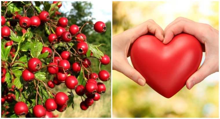 Успокаивающее действие оказывает свежий сок полученный из плодов боярышника употребляют