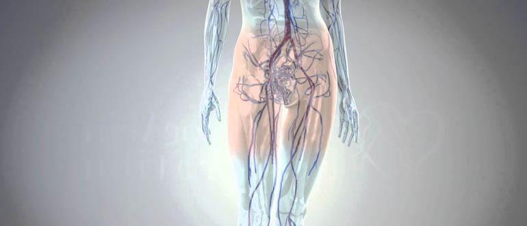 Варикоз вен малого таза у женщин - причины, симптомы, диагностика, лечение