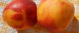 польза персиков для человека