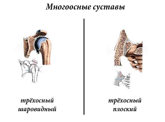 многоосные суставы
