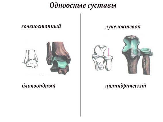 одноосные суставы