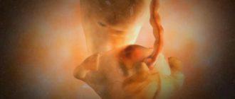 Малыш на 6 неделе беременности